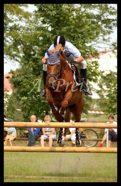 Volta konie jazda konna i jeździectwo